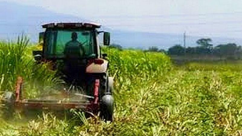 El sector agrícola tendrá subasta para sus insumos
