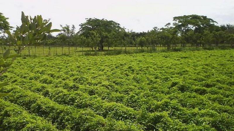 Piden transparencia y rapidez para éxito de subasta agrícola