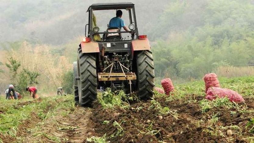 Falta de inversión afecta al sector agrícola local